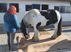 Pferdewaage auf Gut Hahnenseifen