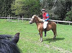 TV Total, Ponyrennen