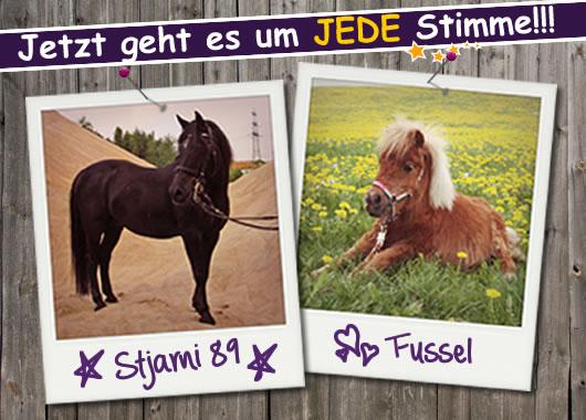 Top Horse of the Year - 2.Votingrunde für Fussel & Stjarni 89