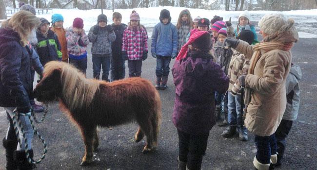 Pferd zu Besuch in der Schule