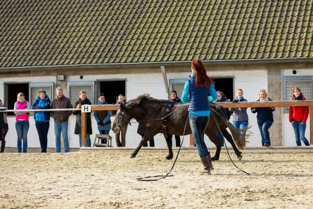 Sandra Schneider - Pferde gymnastizieren an der Doppellonge